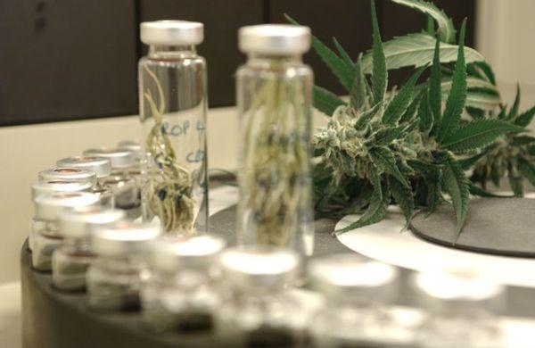 analisis cannabinoides y terpenos semillas revolucionarias