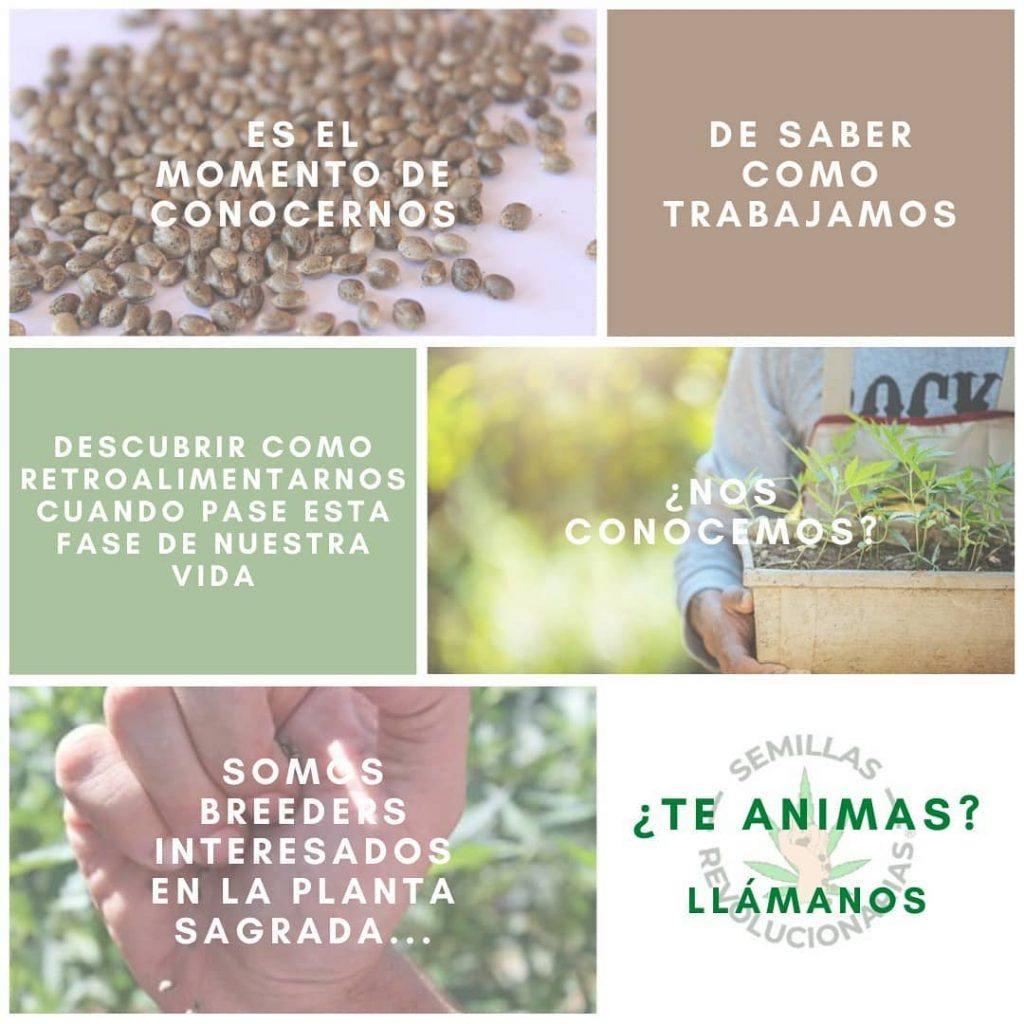 colaboraciones cultivos marihuana