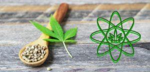 el efecto sequito en semillas de cannabis