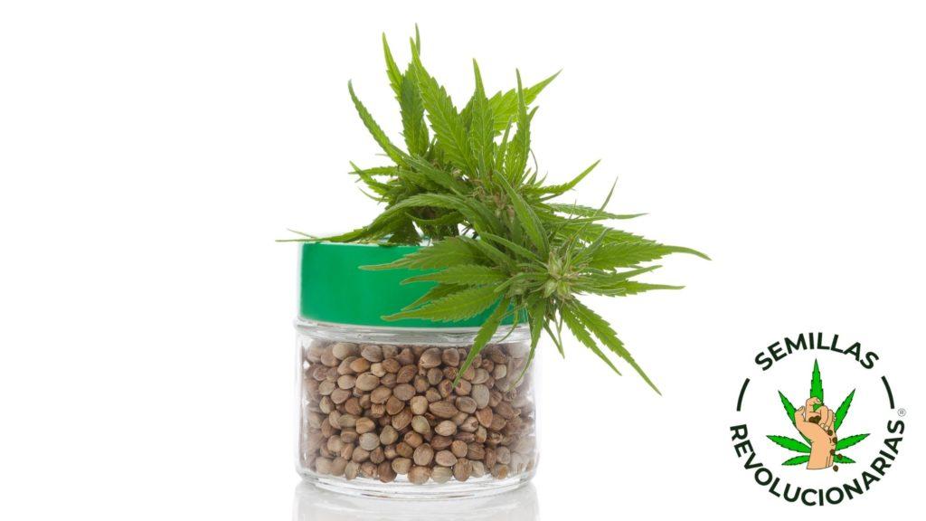 Semillas de cannabis es su envase original